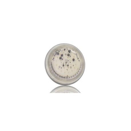 image: Ampoule Lumiplus V2-LED Multicouleur
